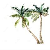一棵椰子树