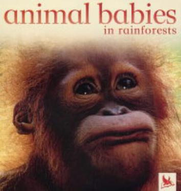 animal babies in rainforests