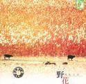 彩虹音乐:野花