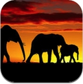 Animal Groups and Their Nouns of Assemblage - Troops, Pods & Parades (iPhone / iPad)