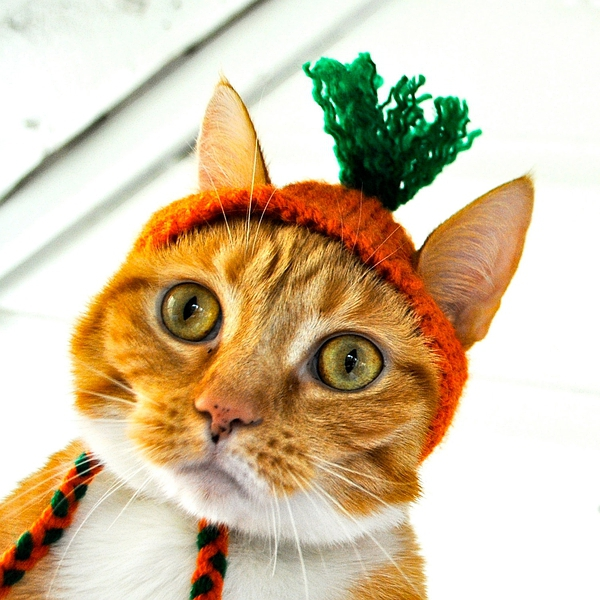 Carrot Costume - Cat的图片