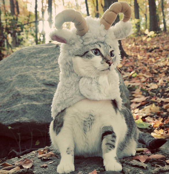 Lil Sheep Pet Costume