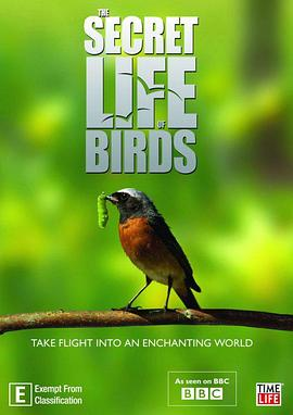 Secret Life of Birds